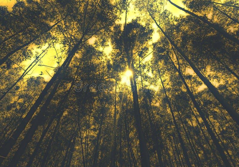 Лес фантазии стоковое изображение rf