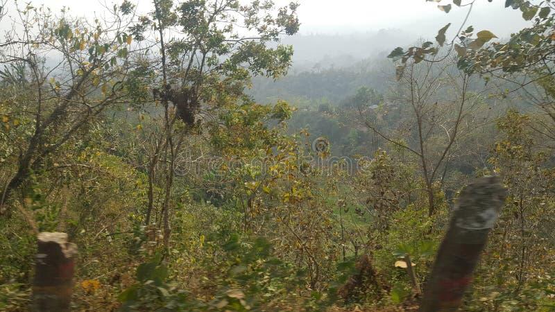Лес холма! Одичалая фотография природы стоковое изображение rf