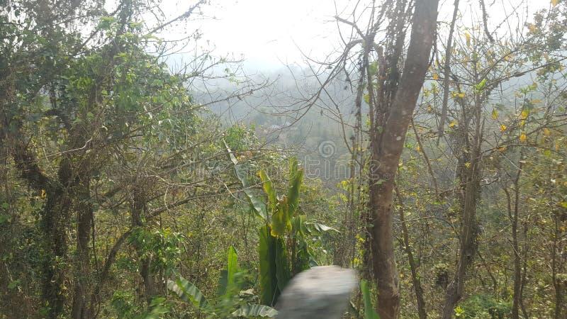 Лес холма! Одичалая фотография природы стоковые фотографии rf