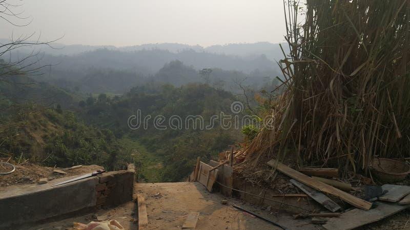 Лес холма! Одичалая фотография природы стоковое фото