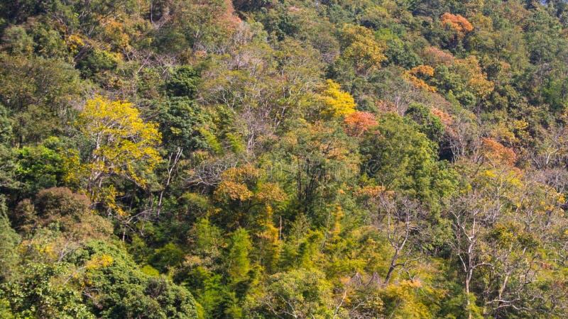 Лес цвета стоковое изображение