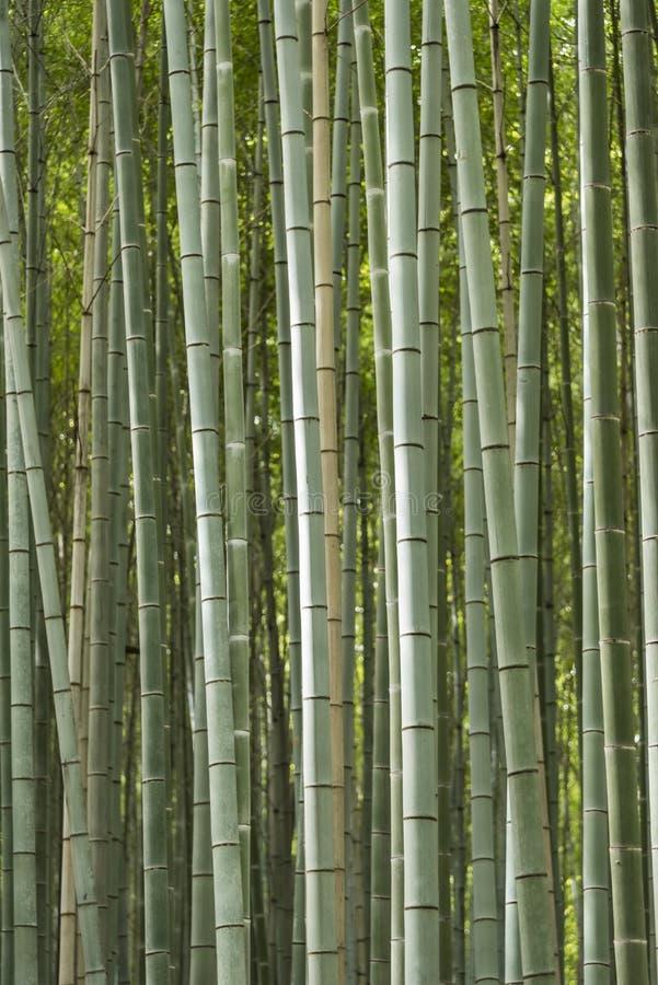 Лес Япония Sagano бамбуковый стоковое фото