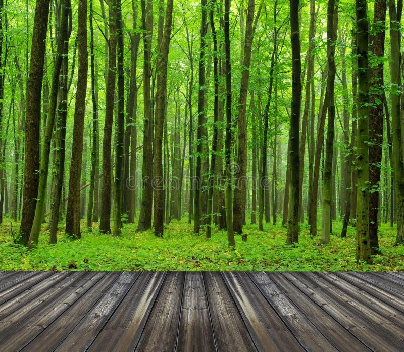 Download Лес стоковое фото. изображение насчитывающей картина - 33729356