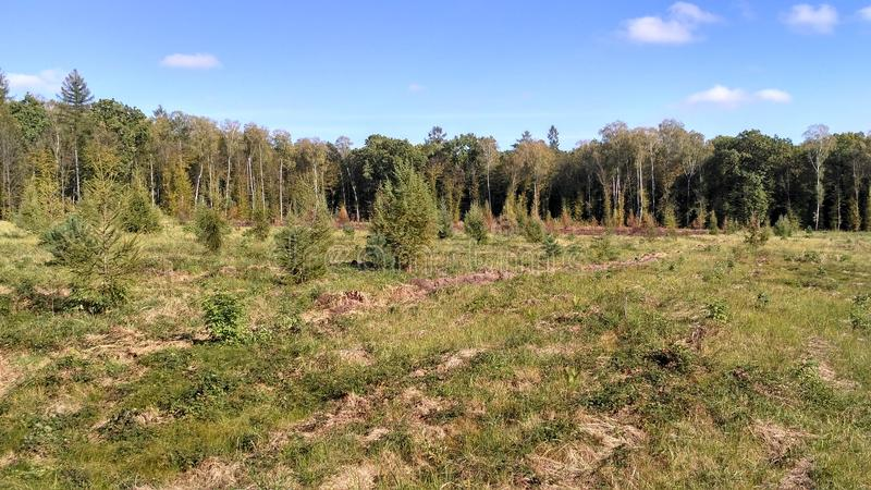 Лес стоковые изображения