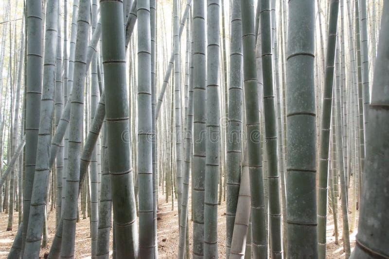 Лес Arashiyama Bambou стоковое изображение rf