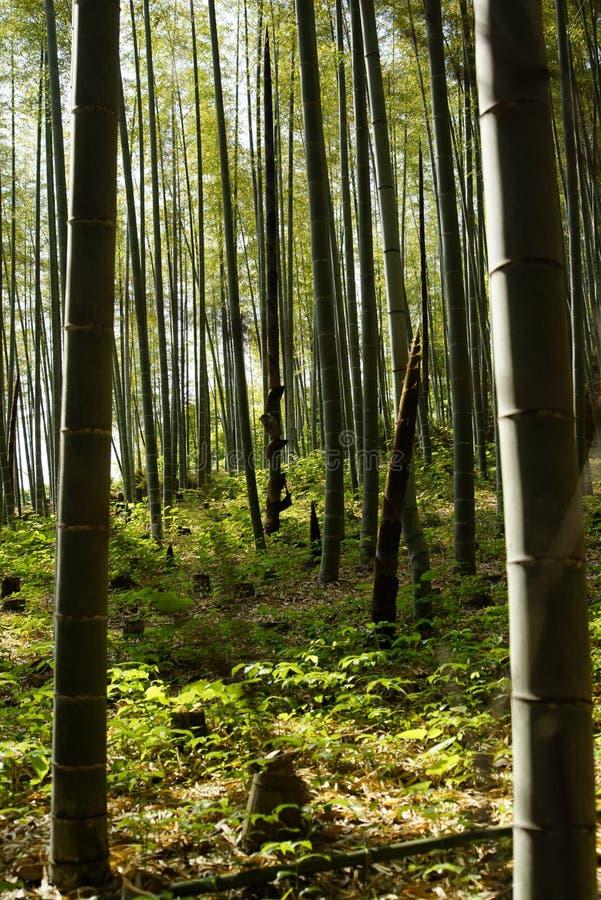 Лес Arashiyama Bambou стоковая фотография