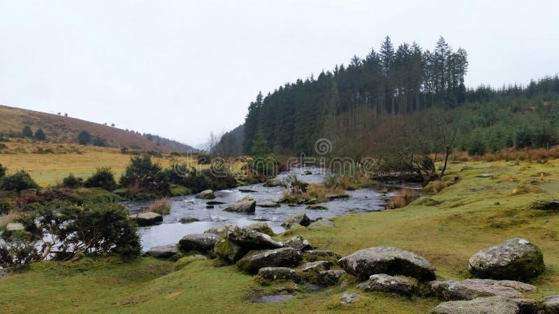 Лес Bellever, национальный парк Dartmoor, Девон, Великобритания стоковые изображения rf