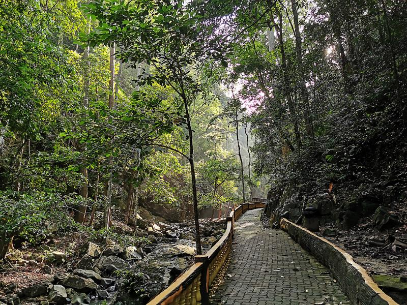 Лес Bukit Wang рекреационный в Jitra, Kedah, Малайзии стоковые изображения rf