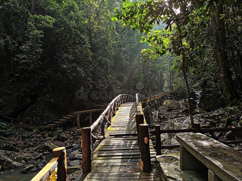 Лес Bukit Wang рекреационный в Jitra, Kedah, Малайзии стоковые фото