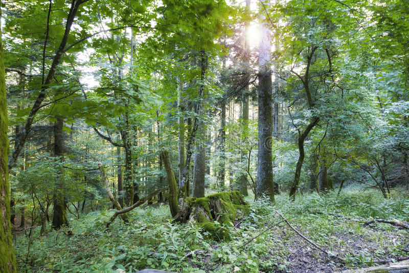Лес Casentino в летнем времени & x28; Эмилия-Романья & x29; мать 2 изображения дочей цвета стоковое изображение rf