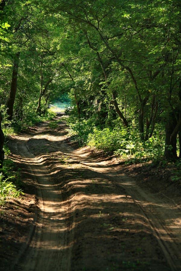 Лес Letea стоковая фотография