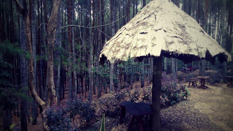 Лес Mangunan стоковая фотография rf