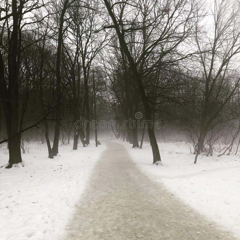 Лес misted в зиме стоковое фото rf
