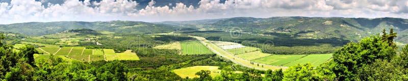 Лес Motovun стоковая фотография rf