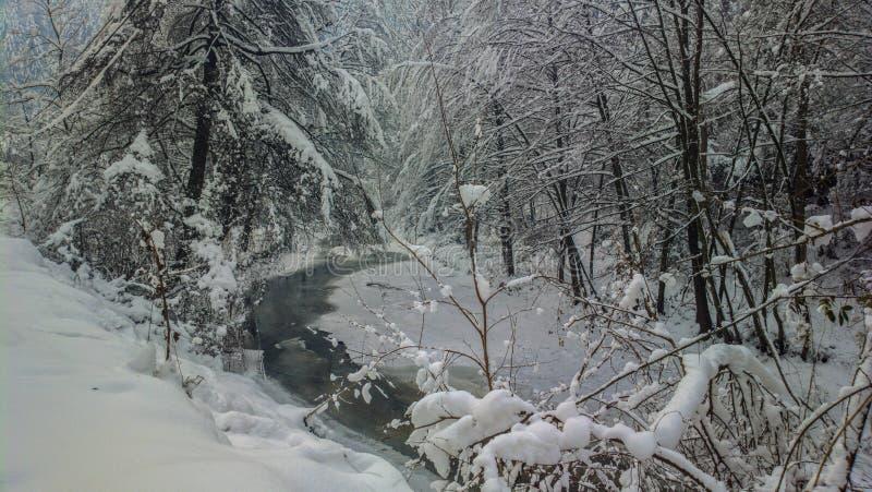 Лес n реки зимнего времени стоковое фото