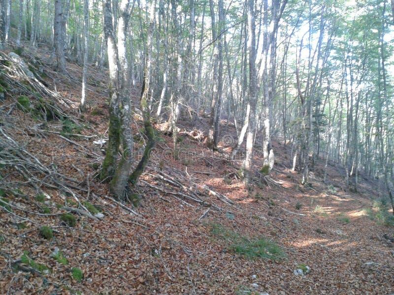 Лес Penches стоковые фото