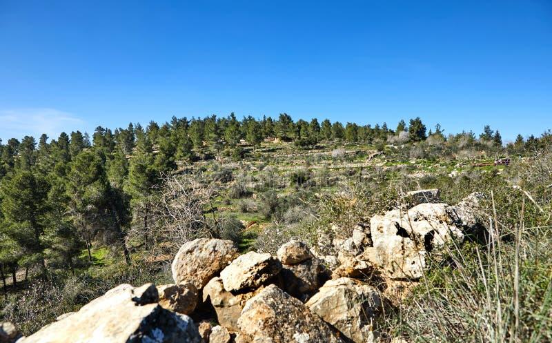 Лес Sataf к западу от Иерусалима Израиля Красивый район пешего туризма стоковое изображение