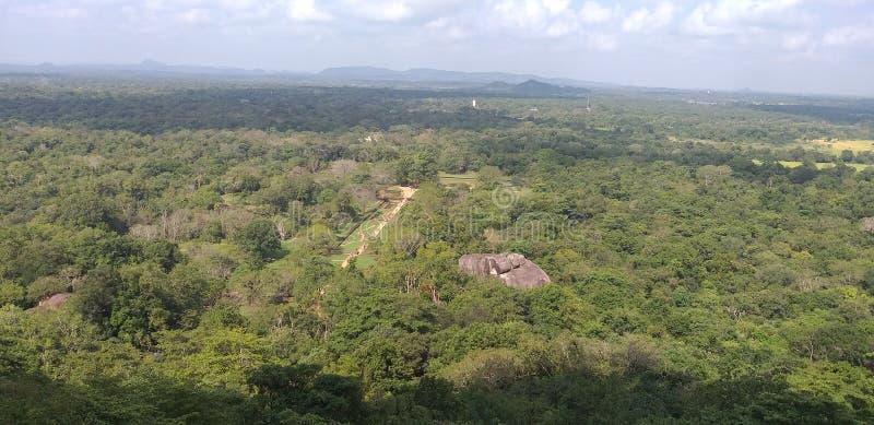 Лес Sinhalaja  стоковая фотография rf
