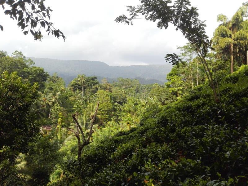 Лес Sinharaja стоковые фотографии rf