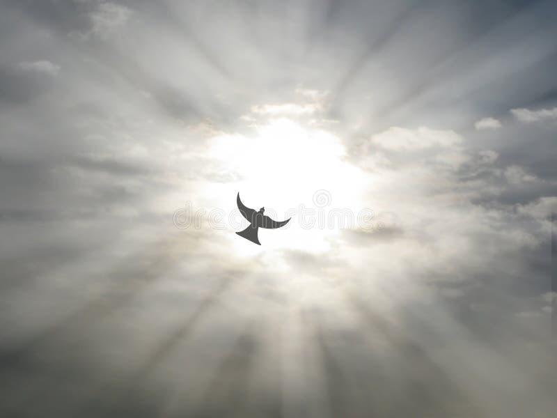 Летание голубя мира святого духа пасхи через открытое небо заволакивает с лучами солнца стоковые изображения