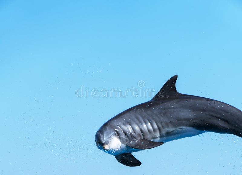 Летание дельфина стоковые фото