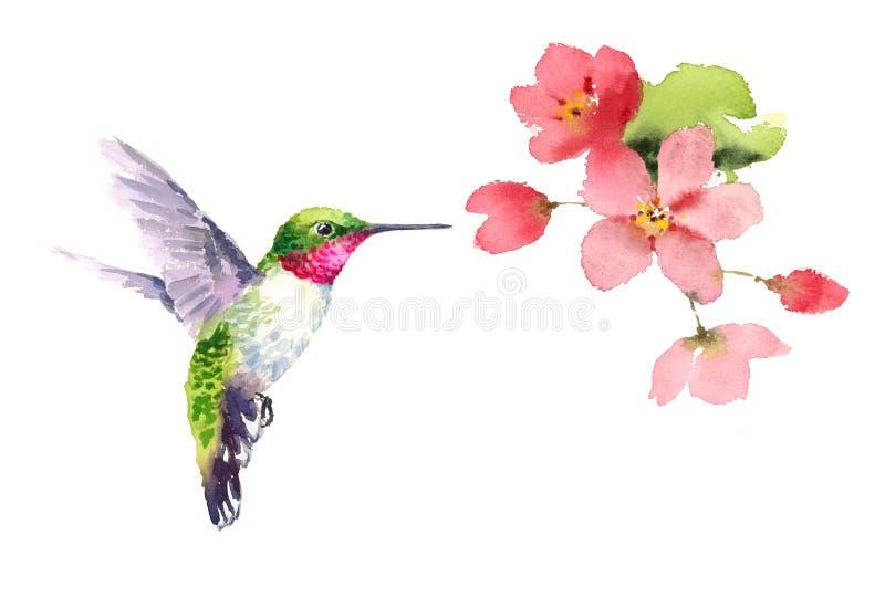 Летание колибри вокруг акварели цветков