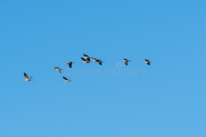 Летание кранов проникать в линии стоковое изображение rf