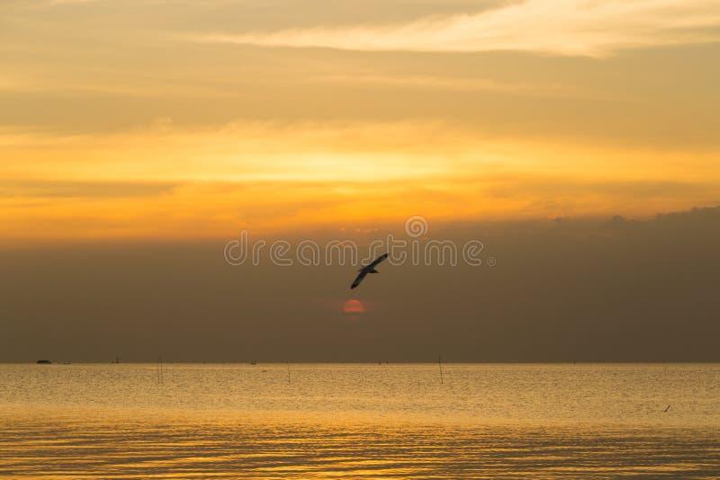 Летание птицы в море стоковые изображения rf