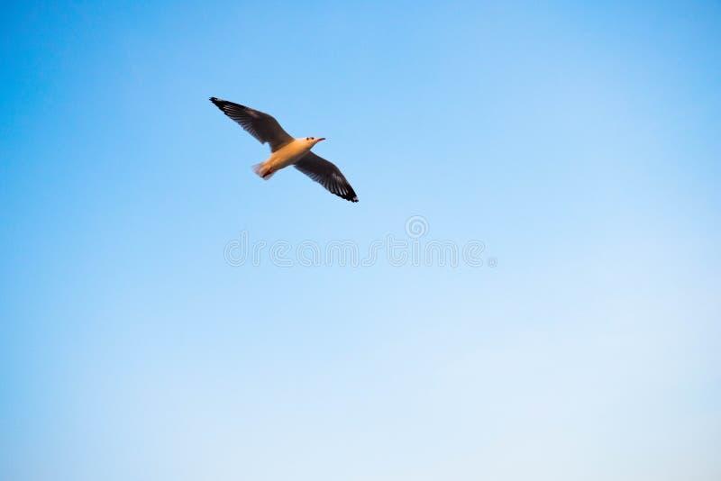Летание птицы стоковое изображение