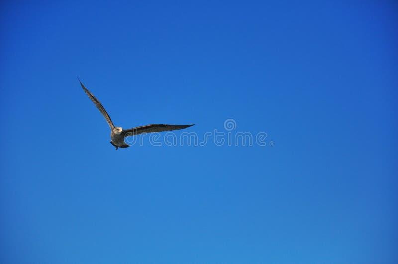 Летание птицы стоковое фото rf
