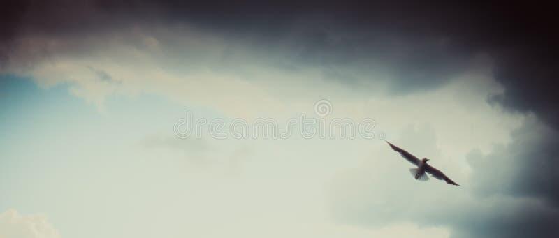 Летание чайки на пасмурном красивом голубом небе стоковая фотография rf