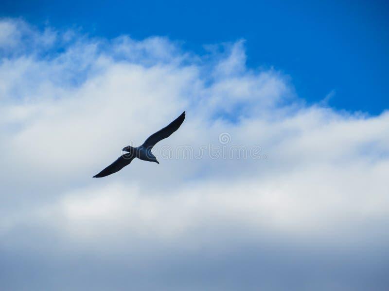 Летание чайки через облака стоковое изображение rf
