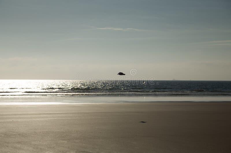 Летать над пляжем стоковая фотография rf