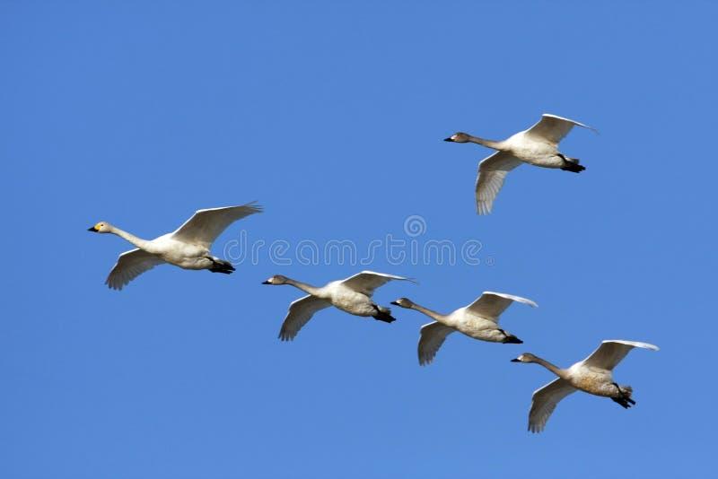 летать свободно стоковая фотография