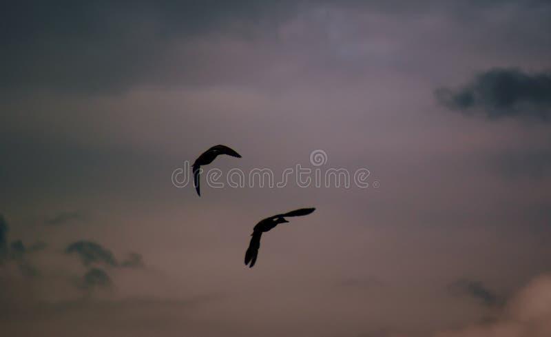 летать уток