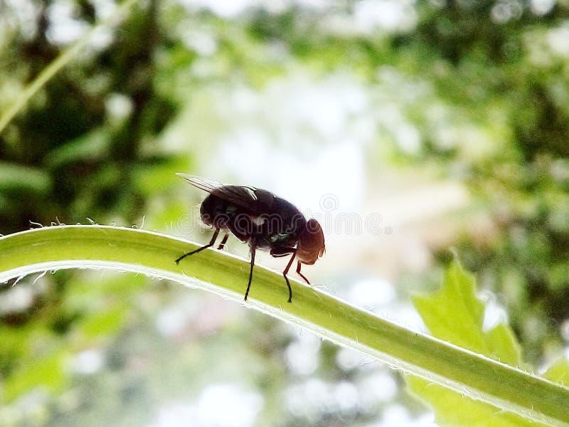 Летите насекомые бесплатная иллюстрация