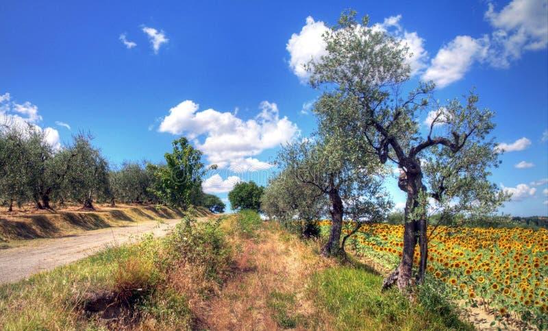 Летнее время в Тоскане, Италии стоковые изображения rf