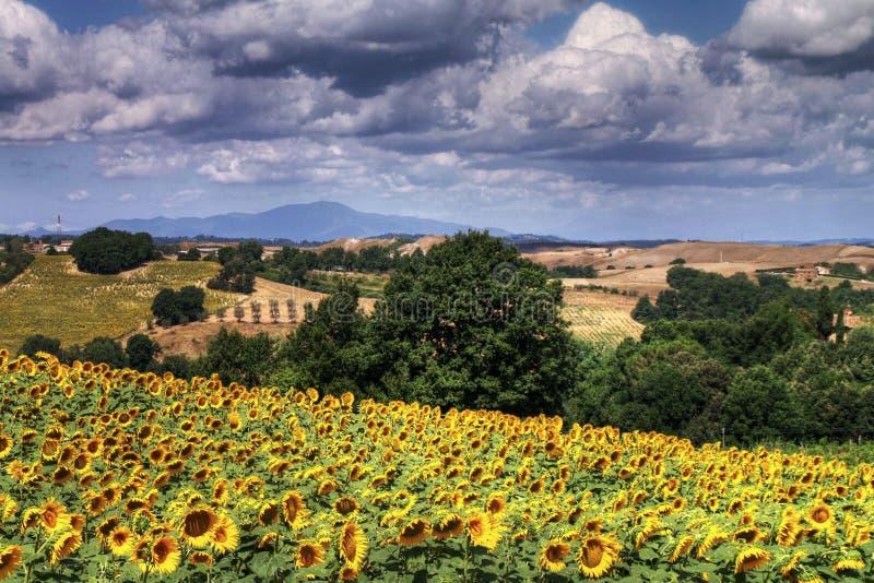 Летнее время в Тоскане, Италии стоковое фото