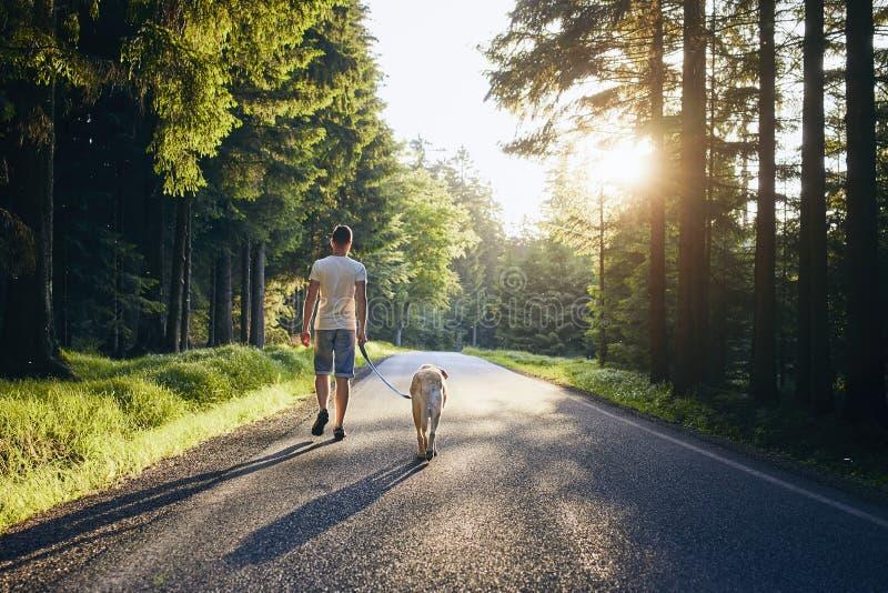 Летнее время с собакой стоковая фотография rf