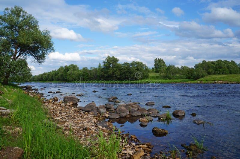 Летний день на реке Msta стоковая фотография rf