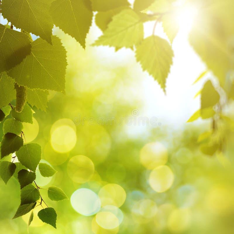 Download Летний день красоты в лесе стоковое фото. изображение насчитывающей цвет - 40591656