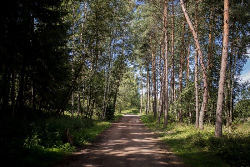Летом улица возле леса стоковые фотографии rf