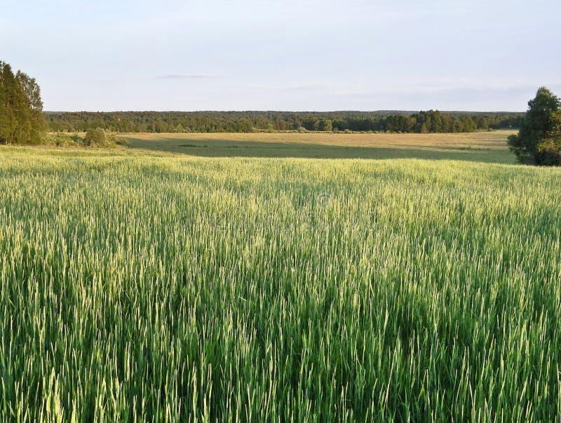 Download лето вечера начала стоковое изображение. изображение насчитывающей ландшафт - 18388633