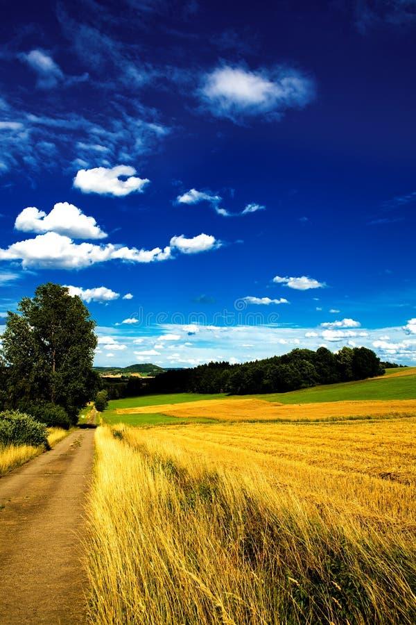Лето в Германии 6 стоковое фото