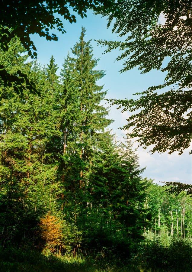 Лето в древесинах стоковое фото rf