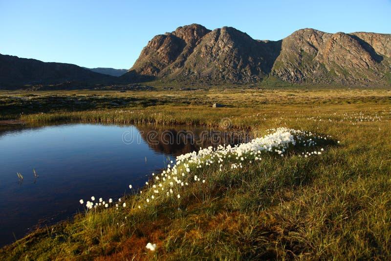 Лето в природе Гренландии стоковые фото