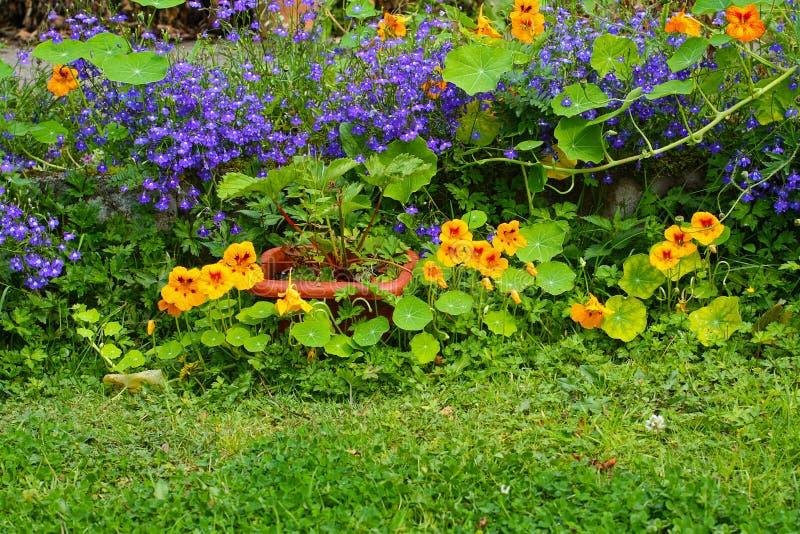 Лето в саде стоковые изображения