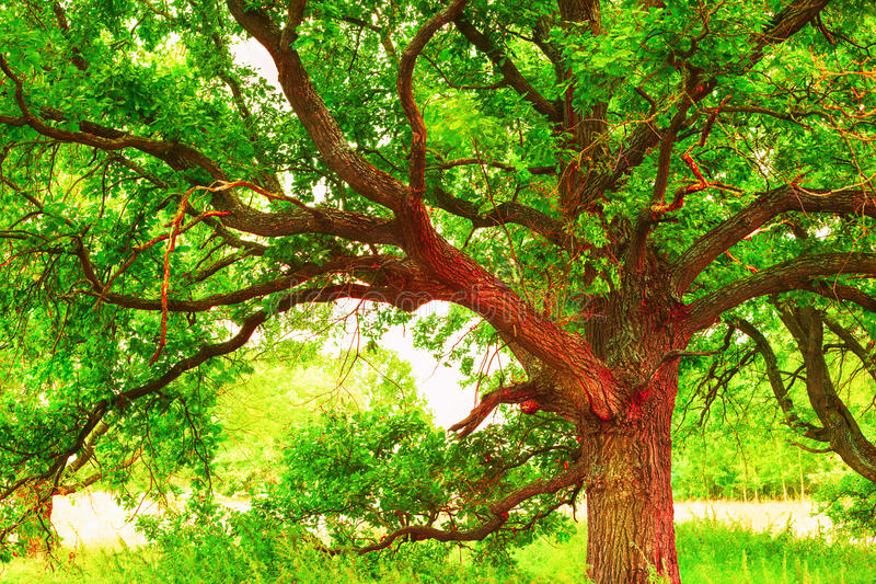 Лето в солнечном лесе дуба стоковая фотография