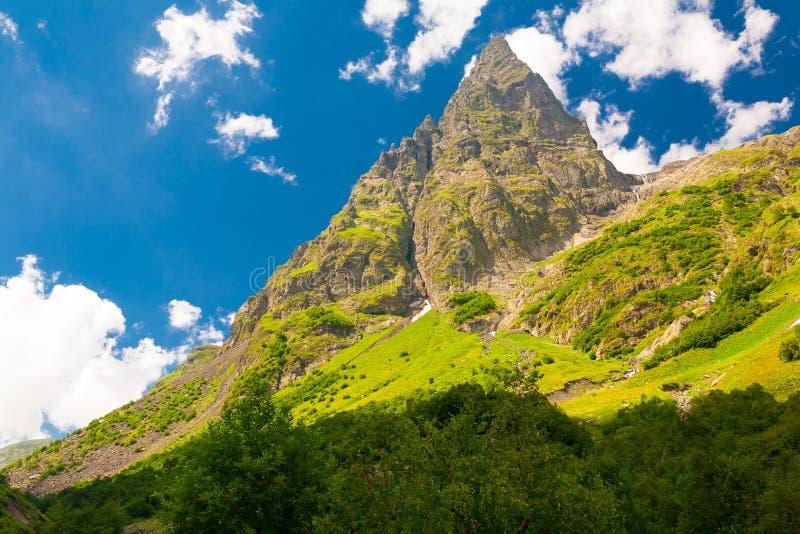 Лето горы день солнечный Зеленые лес и луг стоковое фото
