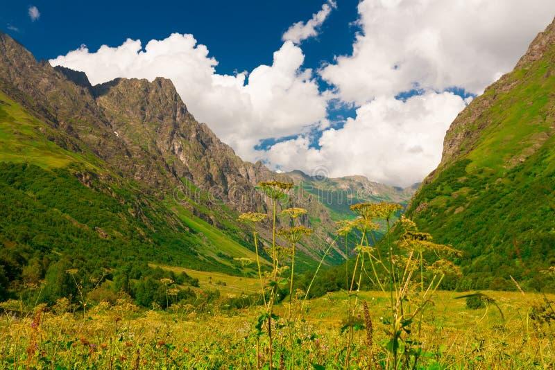 Лето горы день солнечный Зеленые лес и луг стоковое фото rf